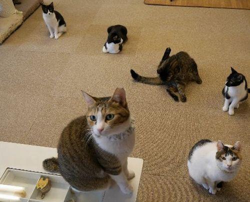 自由にくつろぐ猫たち=ねこかつ