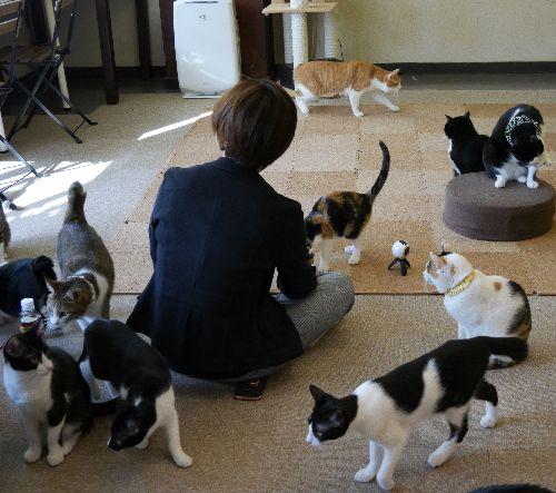 お客さんの周りを猫がぐるり その様子を撮影中