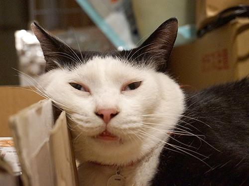 ブログで大人気のカッパちゃん。写真はすべて「NPO法人ねりまねこ」の亀山嘉代さん提供