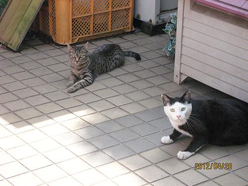 実は幼いころに一度、亀山さんと出会っていた。右の猫はどう見てもカッパちゃん