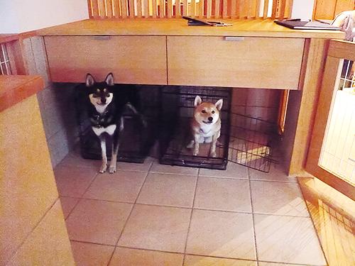 犬の隠れ家