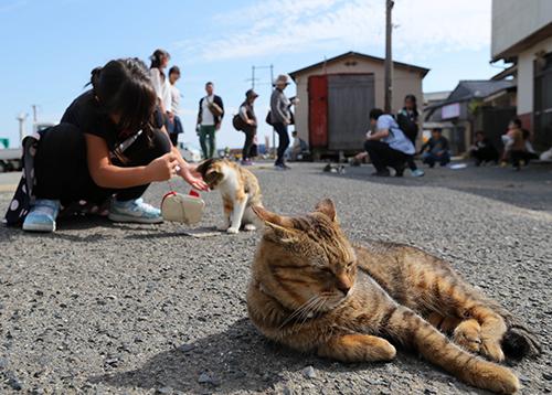 人間とも仲良しの猫たち=福岡県新宮町の相島、金子淳撮影