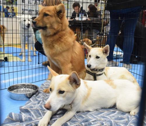 譲渡会に参加した犬たち