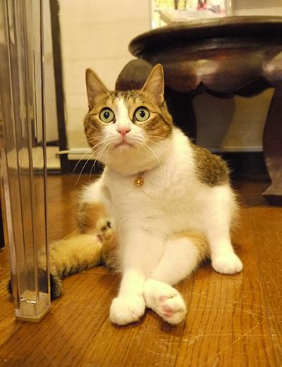 看板猫は身だしなみが大事
