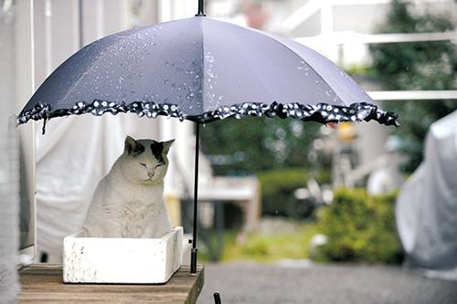 太田家の縁側で雨宿りをする「ぽー」 扶桑社/(C)太田康介