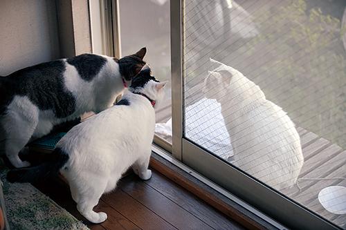 外にいた「ぽー」に興味深々の姉妹猫「とら」と「まる」 扶桑社/(C)太田康介