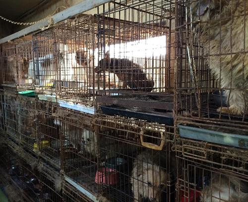 栃木県矢板市内の引き取り屋で飼育されていた犬=動物愛護団体提供
