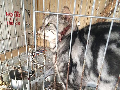 栃木県矢板市内の引き取り屋で飼育されていた猫=動物愛護団体提供