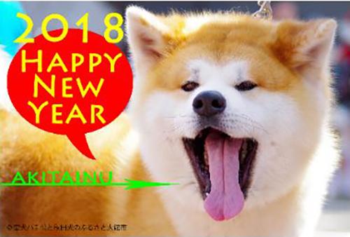 年賀状用の秋田犬の画像©忠犬ハチ公と秋田犬のふるさと大館市