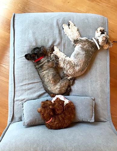 3匹が一緒に寝ている、幸せな一コマ