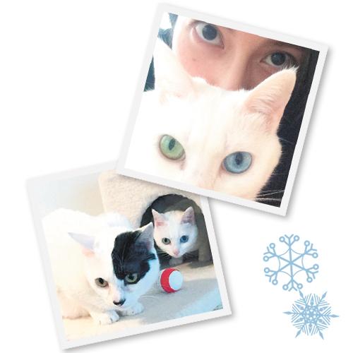 柴咲さんの愛猫たち。のえるはオッドアイの白猫。白×黒の子がるな