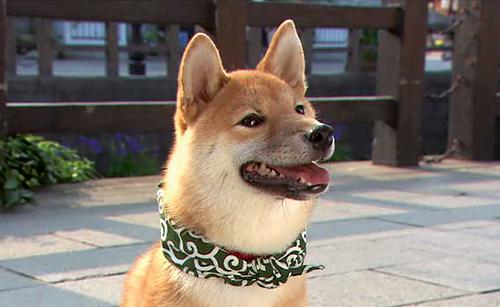 初代豆助(2008年7月~09年5月)=テレビ大阪提供