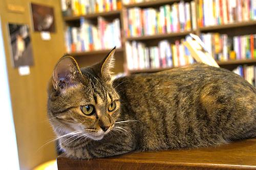 店員猫の「鈴」ちゃん