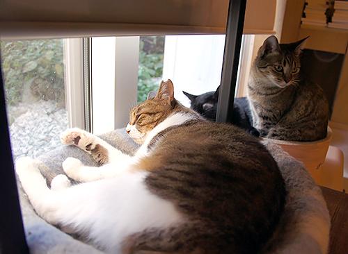 「Cat's Meow Books」で
