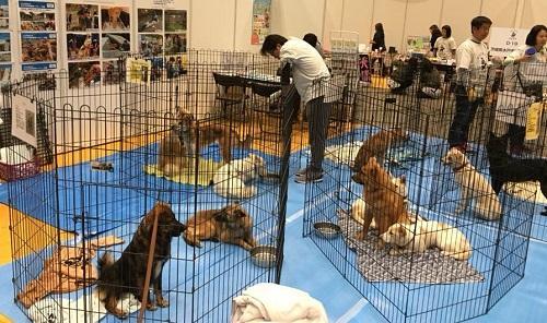保護犬猫340頭が参加した、幕張メッセでの大譲渡会「ブレーメンパーク」