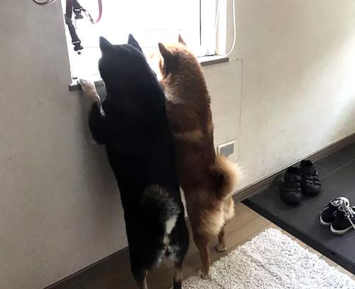 部屋から見た後ろ姿