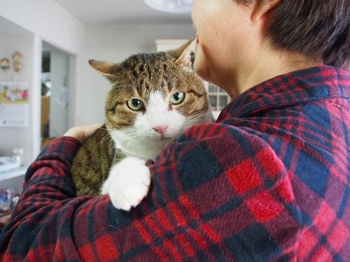 皮膚病が治り別猫のようになった「リオ」(辰巳出版 /佐竹茉莉子)