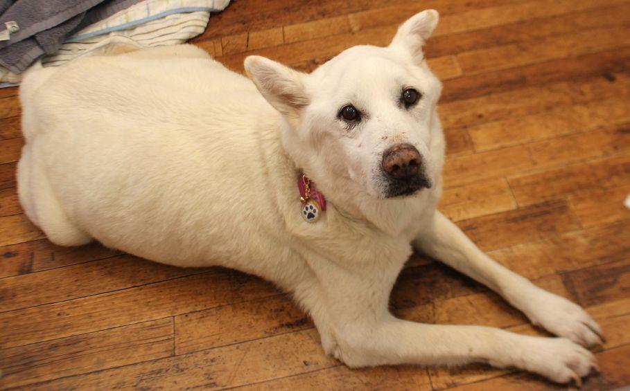 アニマル・ハート・レスキューの保護犬