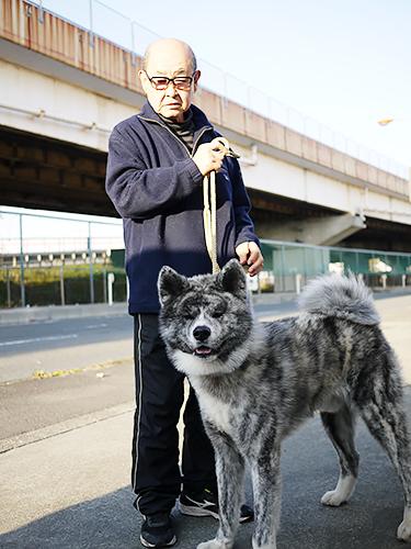 台湾、イタリアなど海外に秋田犬を送り出してきた白井考児さんと玄英号=神奈川県厚木市