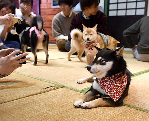 訪れた人たちは豆柴に癒やされていた=岡山県倉敷市中央1丁目
