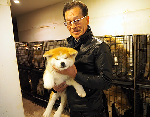 秋田犬の子犬を抱く山口修さん=群馬県高崎市