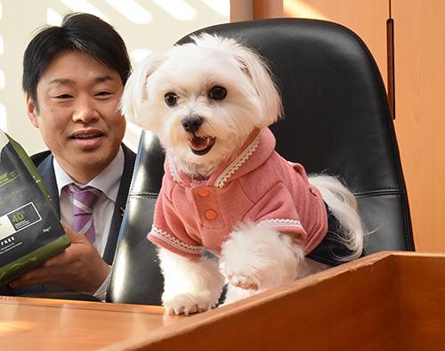 市長室のいすに座り、山田拓郎市長からドッグフードを贈られる「こはる」市長=愛知県の犬山市役所