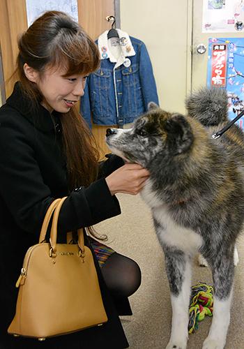 秋田犬「飛鳥」とふれあう来場者=秋田県のJR大館駅前の秋田犬ふれあい処
