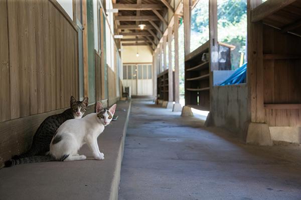 昭和29年に建てられた旧佐柳小学校の木造校舎を自由に出入りして暮らしている