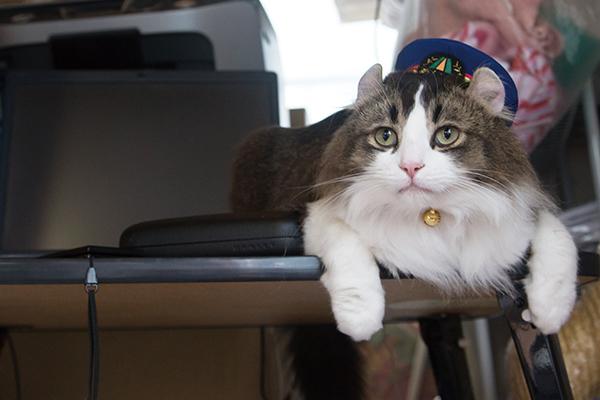 らぶ名誉駅長<br />生年月日:2014年4月10日(3歳) 性別:♂ 猫種:アメリカンカール 2014年に高齢となった「ばす名誉駅長」の後継として、駅長見習いに。2015年に名誉駅長に就任