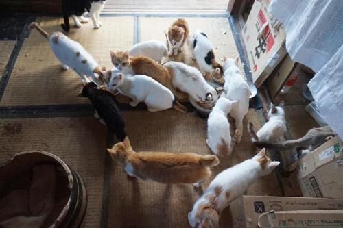 スイくんが救出された多頭飼育崩壊の現場(写真提供:ねりまねこ)