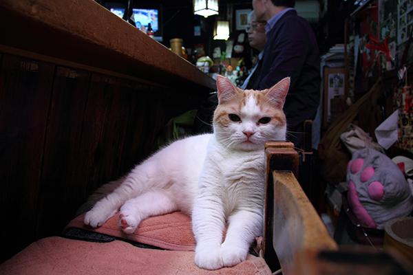 ナデナデしながら……猫見酒で熱燗がすすんじゃいます