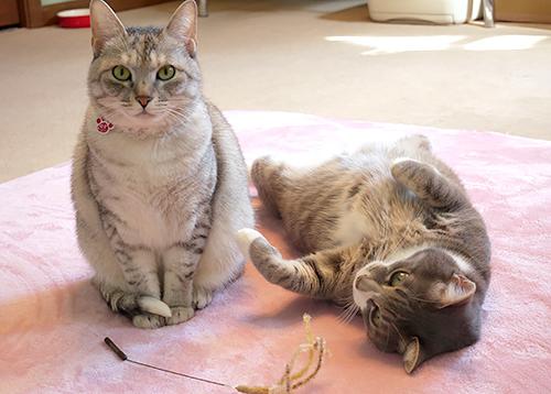 歩さんが猫好きになるきっかけとなった「ゆず」(左)と「すみお」