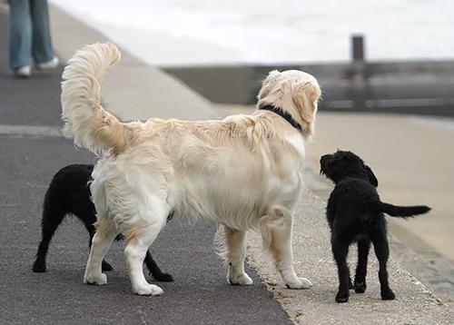 シッポも犬それぞれ