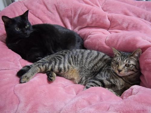 イヌオと、はっぴー(右)。座る位置も一緒(毛布の色も、、)