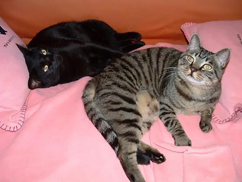 イヌオと、在りし日のルナ(右)