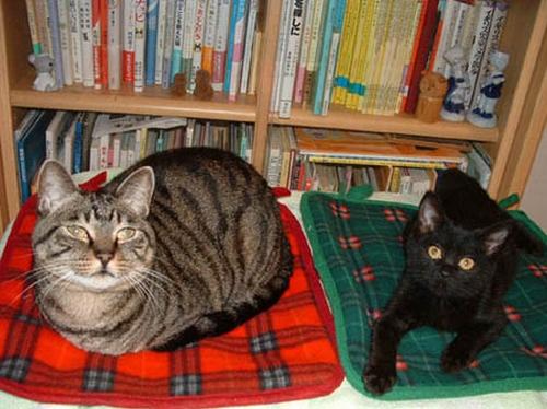 ルナ(左)と、迎えて間もない頃のイヌオ