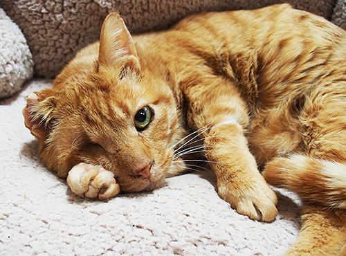 これまでの猫生が偲ばれる風貌。右耳がちぎれ、右目もない