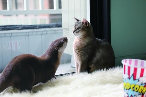 猫のひなちゃん(右)とちぃたん (宝島社提供)