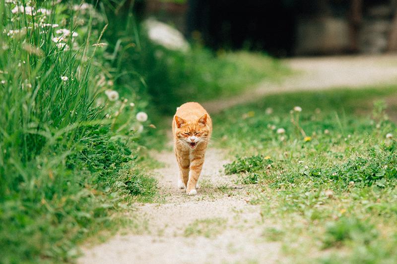 飯舘村で出会った「マメ」。いつも足元まで一直線に歩み寄ってきた(2012年6月3日撮影)