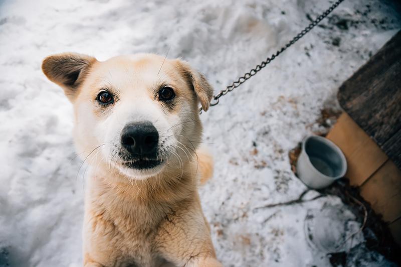 立ち上がり抱き付いてきた「ミッキー」。犬たちは人の訪問を心待ちにしていました(2014年3月11日撮影)