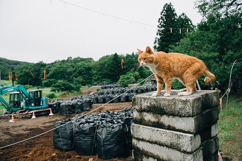 農家にとって大切な土が放射性廃棄物と化す(2014年8月17日撮影)
