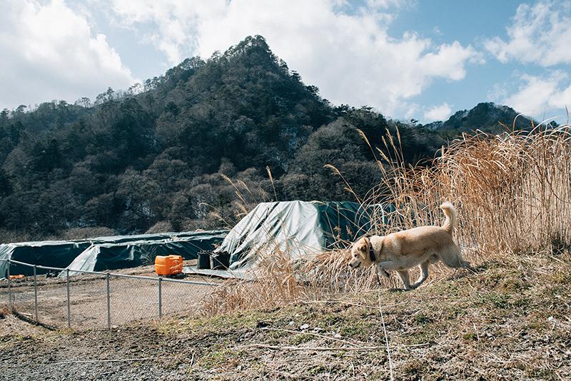 「マリ」と散歩に出発して数分。放射性廃棄物の山がそびえ立つ(2018年2月22日撮影)