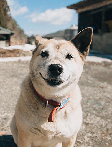 週に数回の飼い主やボランティアの訪問を心待ちにしている「ピッコロ」(2018年3月2日撮影)