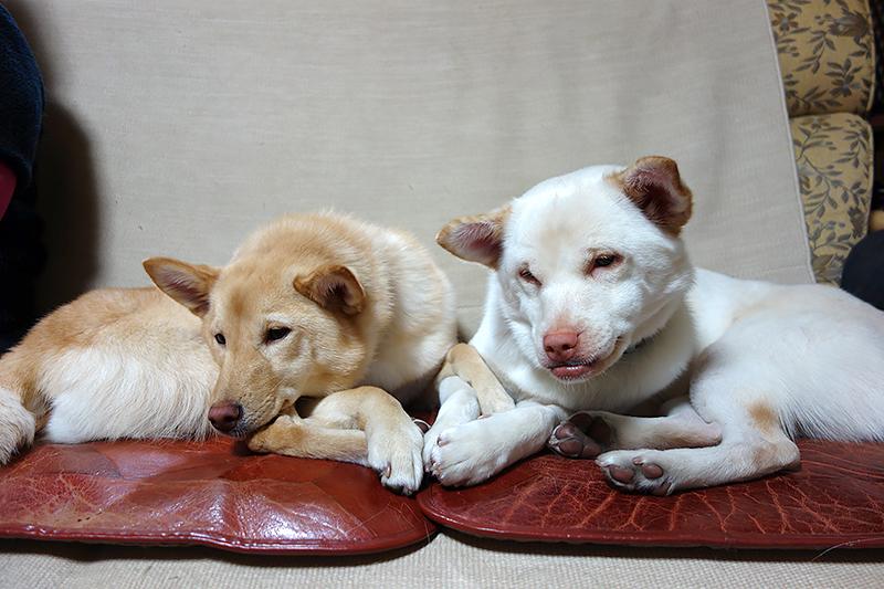 桃(左)とソト=岡本順子さん提供