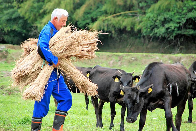 牛に餌をやる松村=15年6月、福島県富岡町、那須圭子さん撮影