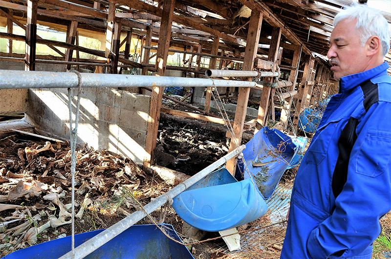 牛たちの白骨を眺める松村=14年12月、福島県富岡町、那須圭子さん撮影
