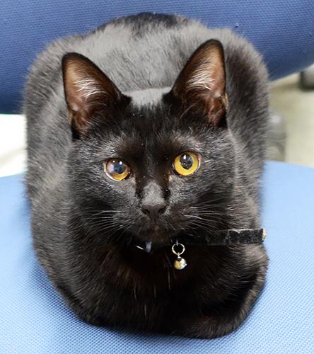 館長見習い中の雌の黒ネコ「クロ」=四万十市の四万十川学遊館