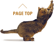 PAGETOP