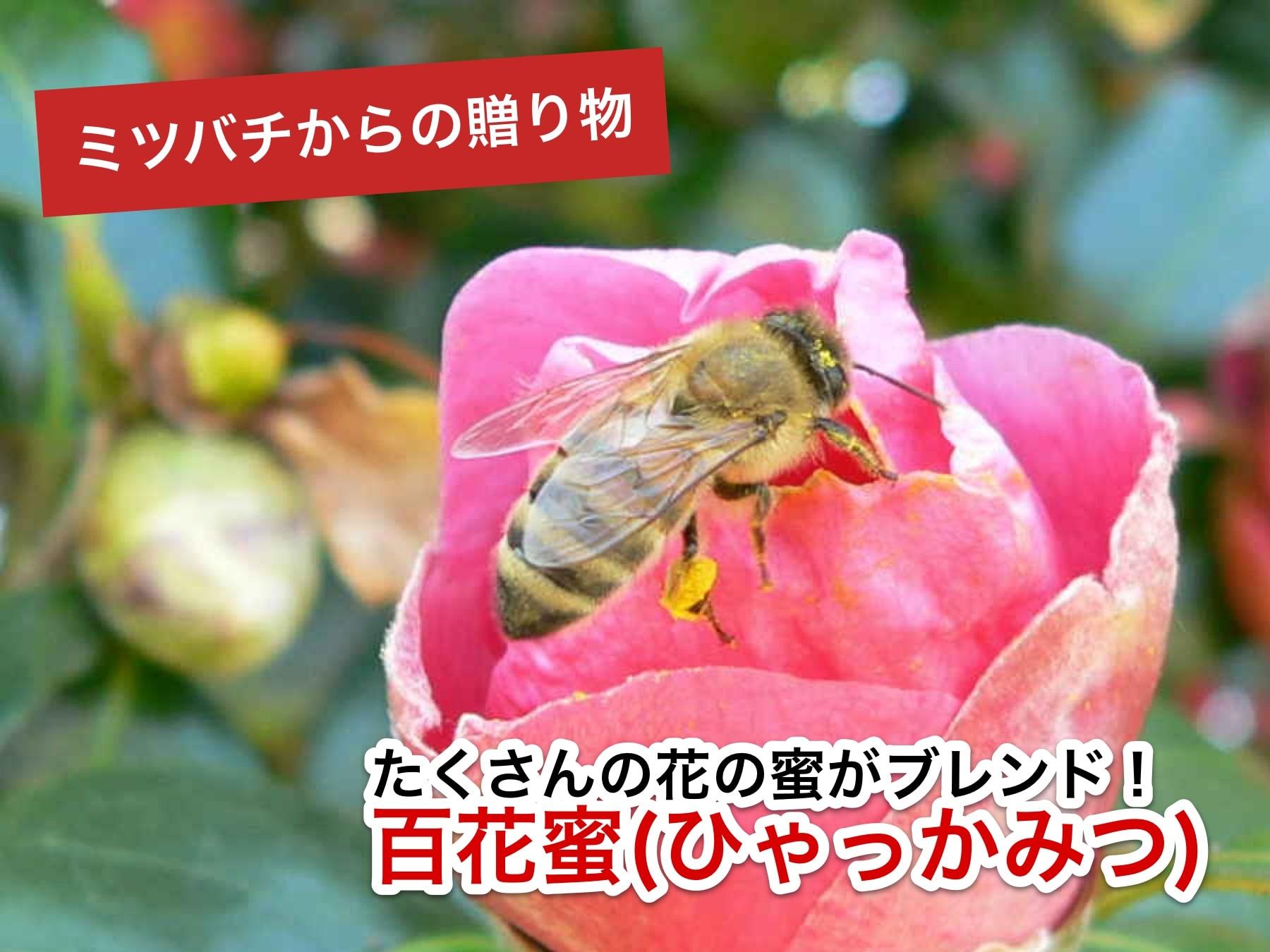 ニホンミツバチのハチミツは百花蜜
