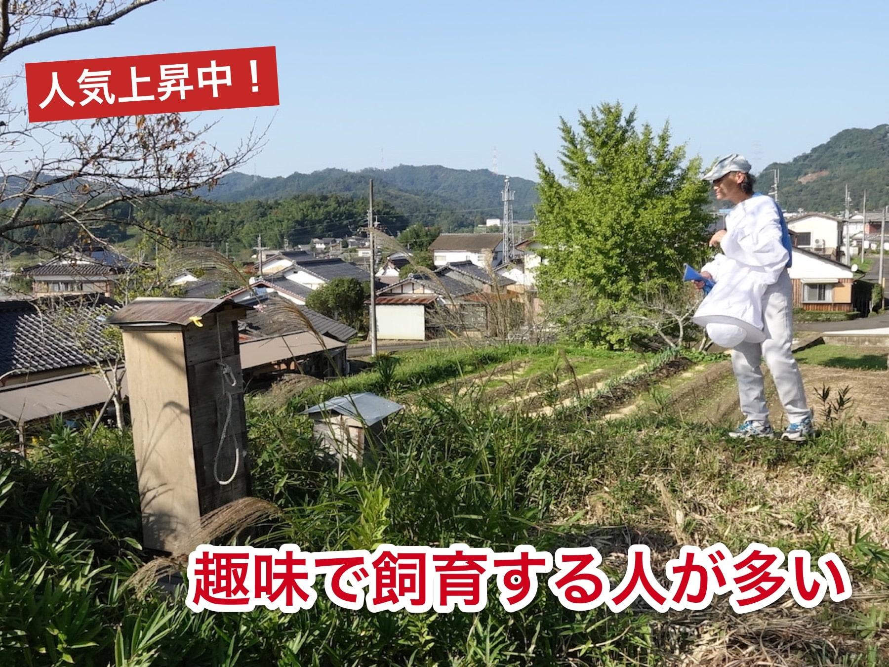 日本蜜蜂を趣味で飼育する人も多い